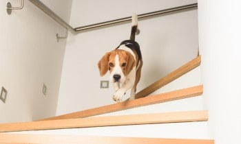 Make Stairs Less Slippery