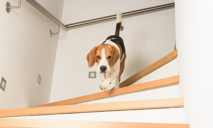 How to Make Wooden Stairs Less Slippery