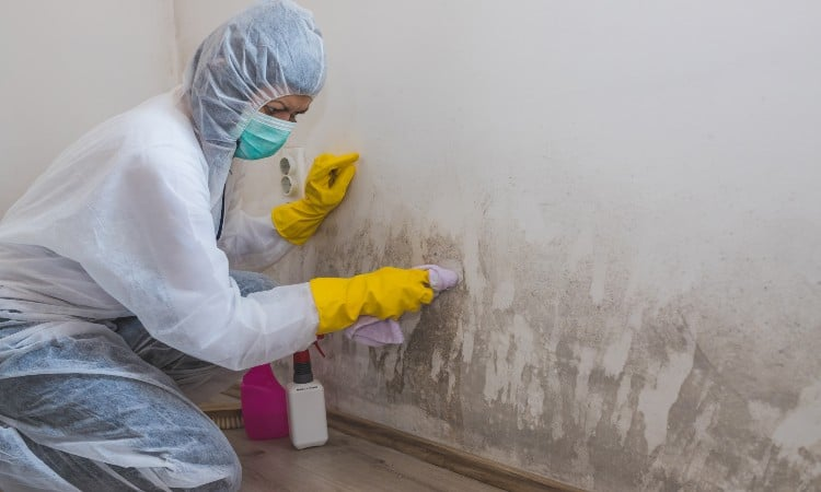How to remove mold from basement