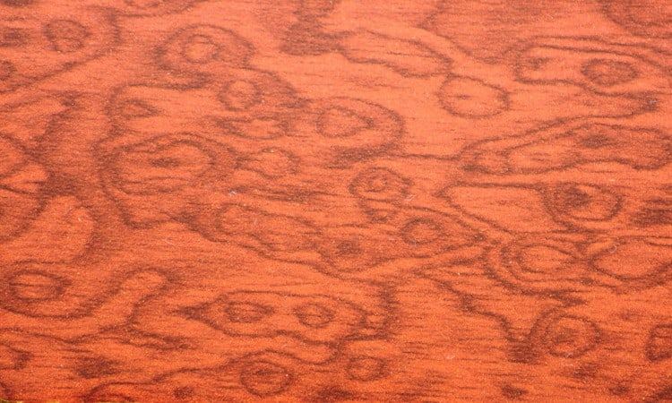 Stain grade plywood